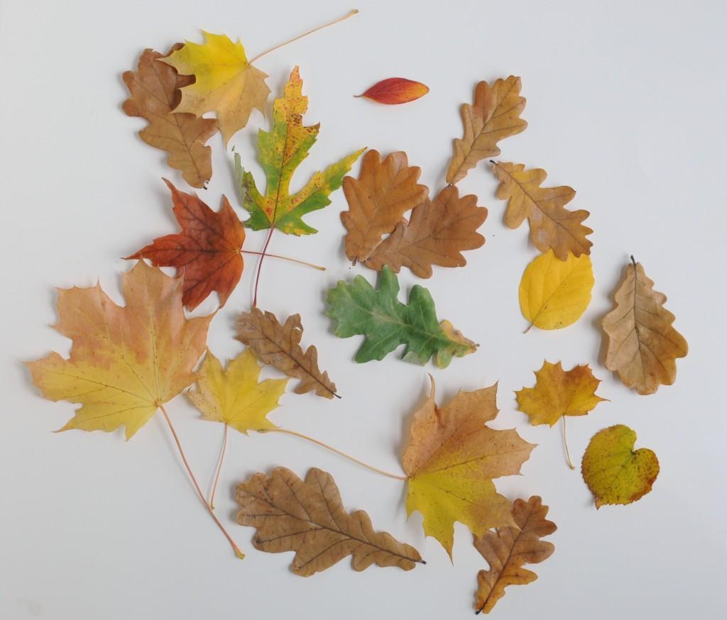 Babiekins Magazine // Craftykins // Painted Leaves