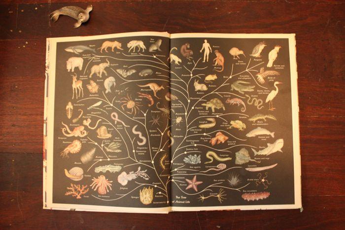 Babiekins Magazine | Storykins  Animalium
