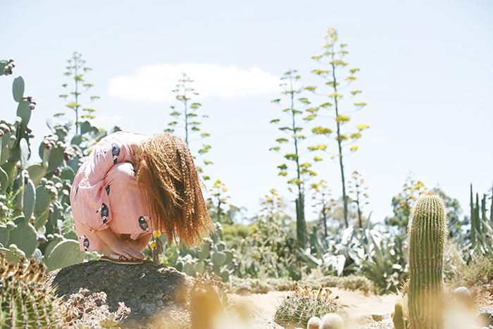 Cactus_33203